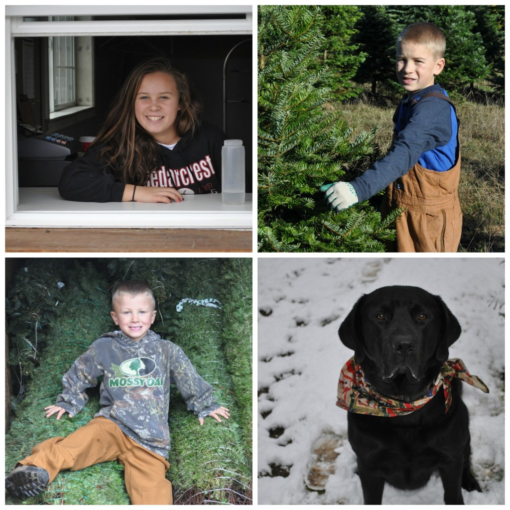 Kids & Tree Farm Dog Cash